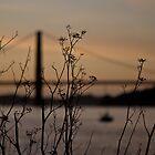 golden gate bridge 05 by suzdehne