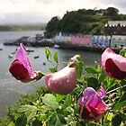 Pink flowers in Portree, Isle of Skye, Scotland by KerryElaine