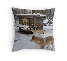 Wolves in Levi, Finland Throw Pillow