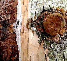 Birch Detail by nadinecreates
