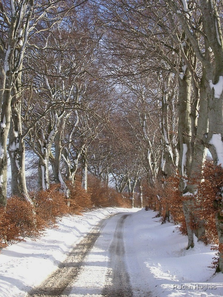 Winter Beech Avenue by R John Hughes