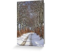 Winter Beech Avenue Greeting Card