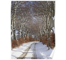 Winter Beech Avenue Poster