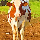 HOW NOW BROWN COW!!!! by gailflipper