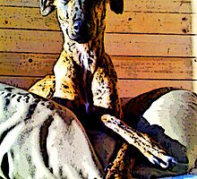 BELLA.REGAL LURCHER.SAVED DOG by gailflipper