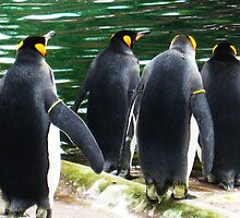 Penguin Parade, Edinburgh Zoo by KerryElaine