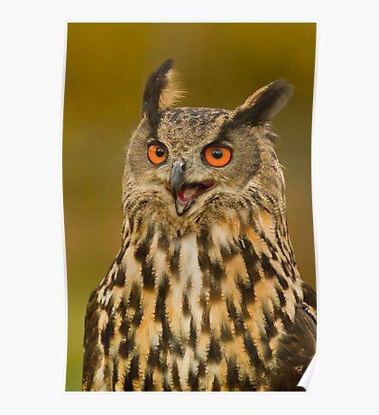 Kaln - European Eagle Owl Poster