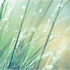 grass 09 by suzdehne