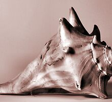 Small Conch by Jay Reed