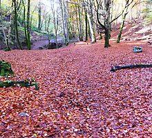 Sea Of Beech Leaves  #2 by Braedene