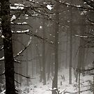 Vermont's First Snow by nadinecreates