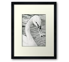 Bird Portrait Graphite Drawing of a Swan Framed Print