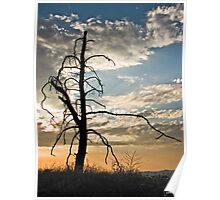 Sky Harbor Lookout Point Poster