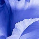 Iris Embrace by Greg Summers
