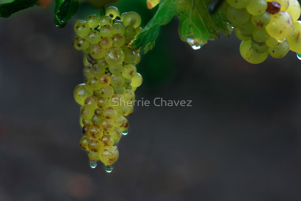 After the Rain by Sherrie Chavez