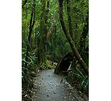 Walkway at Best of All Lookout - Springbrook N.P Photographic Print