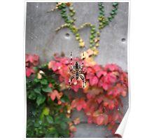 Garden Spider web - downtown Portland, Oregon Poster