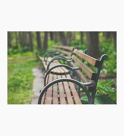 Garden Benches Photographic Print