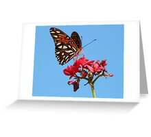 Butterfly at palm island Greeting Card