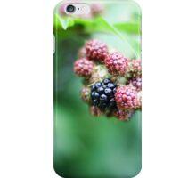 Nearly Ripe WIld Blackberry Bush iPhone Case/Skin