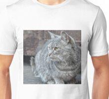 Feral grey cat Unisex T-Shirt
