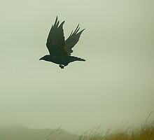 fly raven fly by suzdehne