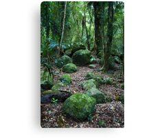 Mossy Boulders - Springbrook N.P Canvas Print