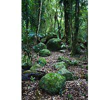 Mossy Boulders - Springbrook N.P Photographic Print