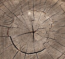 Top view of a cut tree by vladromensky