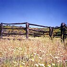 Old Stockyard, Kathleen Springs by Michael John