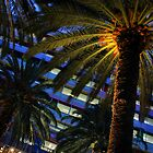 Palms outside NAB by Robyn Lakeman