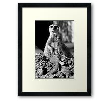 Who are you looking at? Framed Print