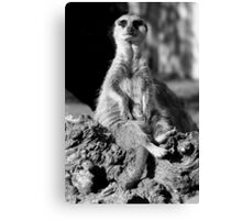 Who are you looking at? Canvas Print