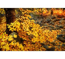 The Colors of Fall  Photographic Print