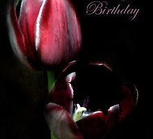 Happy Birthday... by Mary Trebilco