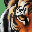 Tiger by exvista