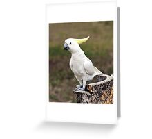 Hello Cocky - Cockatoo at Granite Gorge Greeting Card