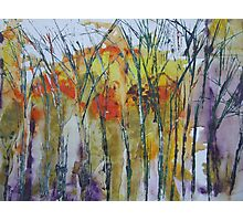 Late winter trees Photographic Print
