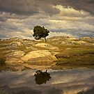 Reflecting Tree - Dog Rocks by Hans Kawitzki