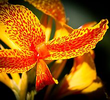 """Nature's Vivid Colour"" - Tiger Lilly by Sophie Lapsley"