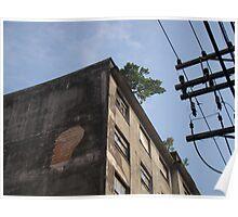 """""""Dia da Árvore"""" rsrsrs Poster"""