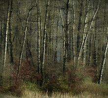 Trees of November by Annie Lemay  Photography