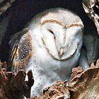 Barn Owl _(Tyto alba)_ by Clive
