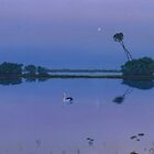 Pelican Moon by Cary McAulay