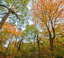 Padley Gorge Autumn Trees by James Grant