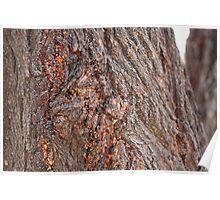 bark - beautiful texture Poster