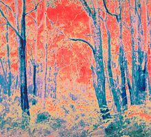 Forest in Colours by pennyswork