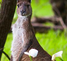 Kangaroo and Flower by Paul Fulwood