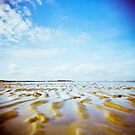 Holga sandy by redcow