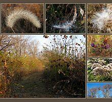 November Days in Ohio by bicyclegirl